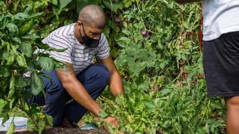 MEEA-KACEE Monthly Event–Black Farmers, Innovators, and the Architects of American Agriculture