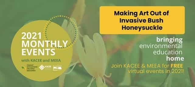 Making Art Out of Invasive Bush Honeysuckle