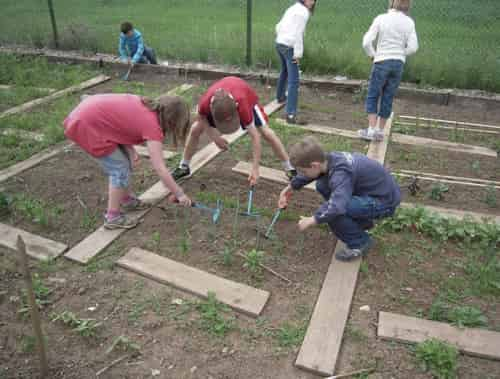 children maintaining a garden plot